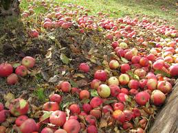Amorris: Apple Hill Getaway 2012 North Canyon Road Mapionet Larsen Apple Barn In Camino California Sacramento Running Off The Rees Page 2 At Hill Engagement Session With Corey And Deli Goodies 101611 Youtube 6 Farms You Should Check Out This Fall El Dorado County Acvities Guide Visit 3 109 Bakery Museum Photos Facebook Home