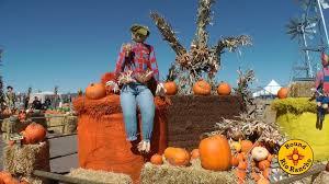 Peter Pumpkin Patch Petaluma by Outrageous Pumpkin Patch Supports Galloping Grace Youth Ranch