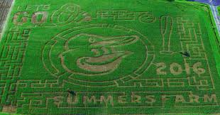 Pumpkin Patch Dixon Ca by Corn Mazes From Coast To Coast Sever U0027s Maze And More