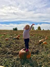 Chatfield Pumpkin Patch Hours by Pumpkin Picking 7th Generation Farm In Louisville Co U2014 The