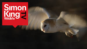 How To Get A Close View Of A Barn Owl - Amazing Trick! - YouTube How To Build A Barn Owl Nest Modern Farmer Best 25 Owls Ideas On Pinterest Beautiful Owl Owls And Audubon Field Guide John James Audubons Birds Of America Or Buy Box Company Tyto Alba Species Tips Encouraging 1861 Best Snowy Saw Whets Images The Australia Australian Geographic 539 Owls Tattoos