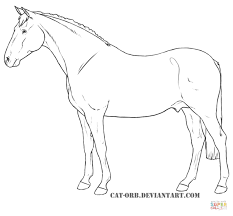 Click The Anglo Arabian Coloring Pages