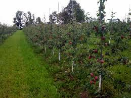 Wheatfield Pumpkin Farm North Tonawanda Ny by Farms Farmshed Nation