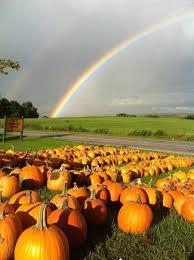 Pumpkin Patches Cincinnati Ohio Area by 37 Best Corn Mazes Images On Pinterest Beautiful Big Red Barn