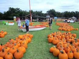 Best Pumpkin Patch Austin Texas by Pumpkins At Sweet Berry Farm Way Out West Austin