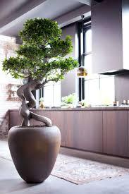 zimmerpflanze des monats ein schönes stück asien für