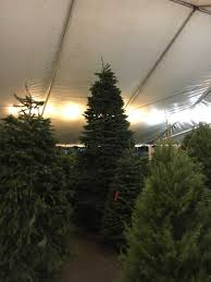 Valley View Christmas Tree Farms 28 S 10 Reviews Concept Of Big Lots Trees Sale