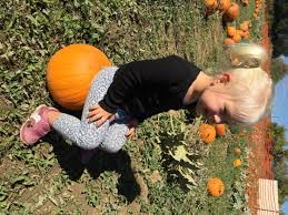 Pumpkin Patch In Colorado Springs Co 2013 by Blog Lovato Real Estate