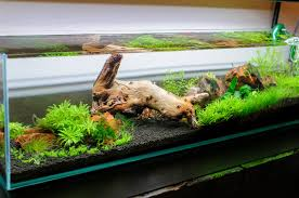 Anyone Use Mopani Wood? Did It Kill Your Shrimp? - The Planted ... Aquascaping Fish Tank Projects Aquadesign George Farmers Live Aquascaping Event At Crowders Ipirations Mzanita Driftwood For Inspiring Futuristic Home Planted Riddim By Alejandro Menes Aquarium Design Contest Ada Horn Wood Beautiful Natural Hardscape For Superwens 2012 Aquascape Petrified Youtube Fish Aquariums The Worlds Best Planted Aquarium Products Designs Reviews Out Of Ideas How To Draw Inspiration From Others Aquascapes 7 Wood Images On Pinterest Sculpture Lab Tutorial Nano Cube Size 20 X 25h