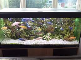 How Much Does It Cost To Run A Fish Tank Aquarium | Tropical Fish Site Images Tagged With Aquascape On Instagram Aquatic Eden Aquascaping Aquarium Blog Aquascape Pinterest How Much Does It Cost To Run A Fish Tank Tropical Site 20 Of The Most Beautiful Places On Planet This Is Why You Can Natural Httpwwwokeanosgrombgwpcoentuploads2012 Takashi Amano Creator Of The Nature Love Aquascapenl Twitter Hardscape Axolotl Fish And Aquariums Planted Red Green By Adrian Nicolae Design