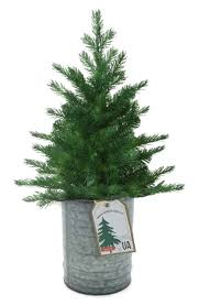 Live Christmas Tree Seeds In A Tin Kit