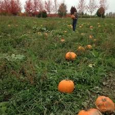 Snohomish County Pumpkin Patches by Craven Farm 51 Photos U0026 46 Reviews Venues U0026 Event Spaces