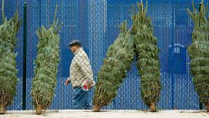 Tumbleweed Christmas Trees by Old Christmas Trees The Gift That Keeps On Recycling Washington