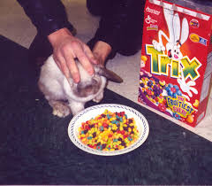 Force Feeding Trix Cereal To Rabbits