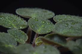 plantes vertes d interieur comment nettoyer une plante verte d intérieur
