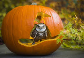 Seymour Pumpkin Festival 2017 by The Monster List Of Family Friendly Halloween Events Puget Sound