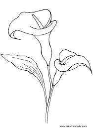 Calla Lily Free Printable Coloring Book Page Picture Print As Portrait
