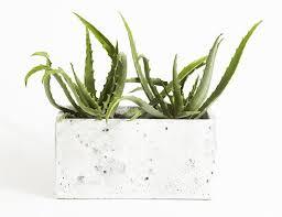 entretien plante grasse d interieur 5 plantes d intérieur impossibles à tuer p g au quotidien p g