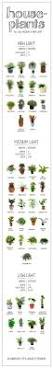Best Plant For Dark Bathroom by Best 25 Low Light Plants Ideas On Pinterest Indoor Plants Low