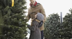 Longest Lasting Christmas Tree by How To Get Your Christmas Tree To Last Through Christmas Aol Finance