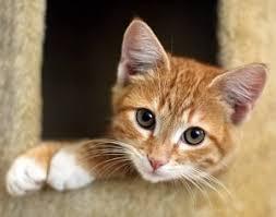 orange cat names 70 orange cat names find the purrfect name all pet magazine