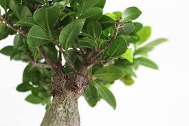 pflanzen im schlafzimmer grüne oase für die optimale