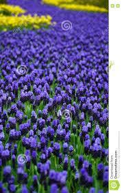 tapis de fleur fleurs bruxelles date des 2016 2014 scah info