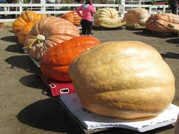 Uesugi Farms Pumpkin Patch by A Perfect Autumn Day Foodie Loves Fitness
