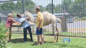 100 Tiger Truck Stop Louisiana Camel Replaces Tony The At Roadside Truck Stop