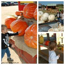 Pumpkin Patch Austin Texas 2015 by Sweet Berry Farm Fall Pumpkin Patch Near Austin Texas