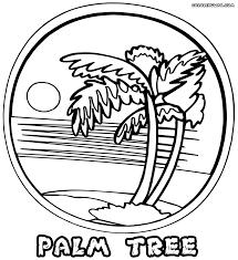 Palm Tree In Heaven