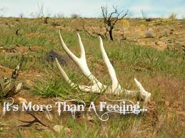 Deer Antler Shed Hunting by Images About Country Life On Pinterest Cowgirl Boots Deer Antler