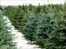 Dillards Christmas Tree Farm by Sale U0026 Clearance Women U0027s Jeans U0026 Denim Dillards Birthday Ideas
