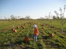 Lodi Pumpkin Patch Wisconsin by Farms Raising Madison
