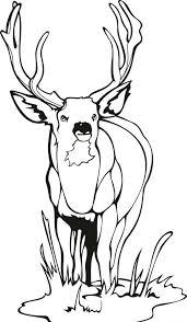 Reindeer Coloring Pages Printable Santa Free Christmas Deer Medium Size