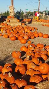 Pittsburgh Area Pumpkin Patches by 11 Pumpkin Patches To Visit In Arizona