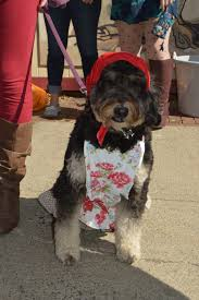 Salem Ma Halloween Events 2016 by Howl O Ween Costumed Pet Parade Salem Ma New England Nomad