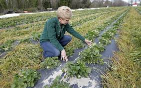 Best Pumpkin Patch Hampton Roads by Cold Weather Frost Deals A Blow To Some Hampton Roads Farmers