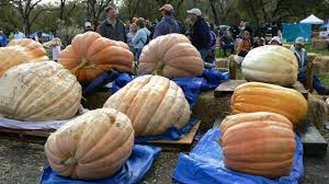 What Kinds Of Pumpkins Are Edible by Bbc Earth The Biggest Fruit In The World
