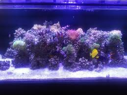 Post Your Modern Aquascape - Reef Central Online Community Home Design Aquascaping Aquarium Designs Aquascape Simple And Effective Guide On Reef Aquascaping News Reef Builders Pin By Dwells Saltwater Tank Pinterest Aquariums Quick Update New Aquascape Of The 120 Youtube Large Custom Living Coral Nyc Live Rock Set Up Idea Fish For How To A Aquarium New 30g Cube General Discussion Nanoreefcom Rockscape Drill Cement Your Gmacreef Minimalist 2reef Forum