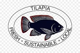 Logo Fish Tilapia Label Brand
