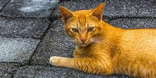 orange cat names cat articles