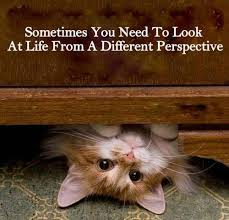cat quotes cat quotes by ashry42 on deviantart