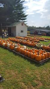 Great Pumpkin Patch Arthur Il by The 10 Best Pumpkin Patches In Illinois 2016