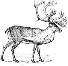 Free Caribou Clipart 1 Page Of To Use Images