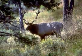 Elk Shed Hunting Utah by New Elk Plan Approved Backcountry Utah