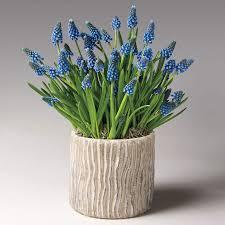 bulb garden gift plants from jackson perkins