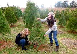 Myers Pumpkin Patch Harrisonburg Va by Every Soul Acres Choose And Cut Christmas Trees Pumpkin Patch