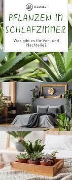 pflanzen im schlafzimmer diese sorten eignen sich diese