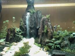 Aquascape Design Stirring Home | Zhydoor September 2010 Aquascape Of The Month Sky Cliff Aquascaping How To Set Up A Planted Aquarium Design Desiging Tank Basic Forms Aqua Rebell Suitable Plants With Picture Home Mariapngt Nature With Hd Resolution 1300x851 Designs Unique Hardscape Ideas And Fnitures Tag Wallpapers Flowers Beautiful Garden Best 25 Aquascaping Ideas On Pinterest From Start To Finish By Greg Charlet